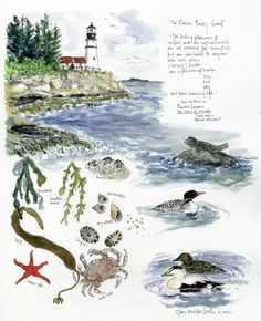 Illustrations in a nature journal