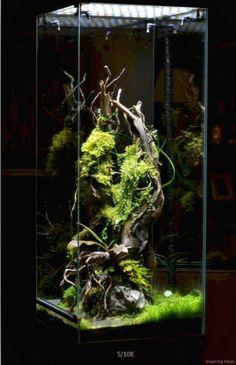 Terrarium Reptile, Aquarium Terrarium, Terrarium Plants, Planted Aquarium, Chameleon Terrarium, Orchid Terrarium, Vivarium, Paludarium, Aquascaping