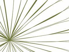 Strahlen, Farbvariante: brightgrün #wallpaper #design #christianeElle