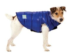 Fashion Pet Blue Reversible Puffy Dog Vest Large -- Don't get left behind, see this great dog product : Products for dogs
