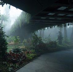 pont / forêt / jungle / route / ambiance / photopaysage / junglespourpres