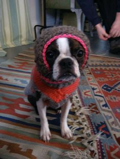 millie is wearing- a hat by beanhandmade & a sweater by Urbanknitfits