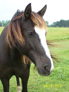 Maybe you are looking for a new, larger family member :) Here is a Equine Rescue here in AR. They have some beautiful horses