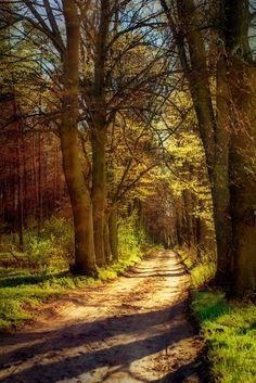 Forest road (Masovian, Poland) by Grzegorz Grzesiak