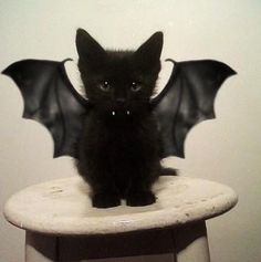 Bat Kitten!🎃