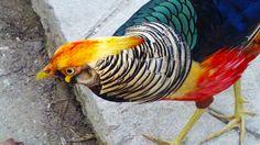 L'oiseau arc-en-ciel ! #Thailande #Chiang #Mai #oiseau