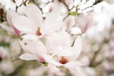 Magnolia's Make me happy! #Makesmehappy @White Stuff UK