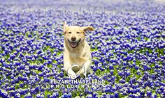 Summer Fun Labradors with Elizabeth Arellano   It's a Lab Thing
