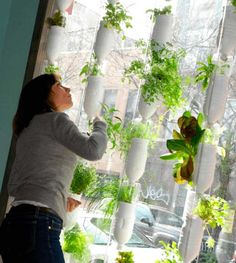 Hydroponic Wall | Hydroponic Systems Round Up