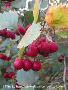 Autumn Photos, Helsinki, Finland, In This Moment, Amazing, Travel, Life, Fall Photos, Voyage