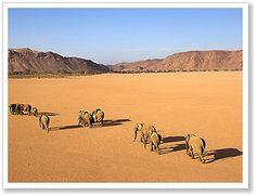Independent Namibia travel - Elephant desert trek