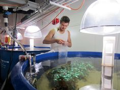 To Simulate Climate Change, Scientists Build Miniature Worlds - The New York Times