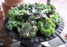 The black of this iron urn makes the colours and textures of these succulents pop.