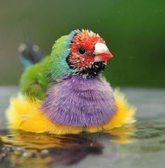 waterbird of some king Pretty Birds, Beautiful Birds, Animals Beautiful, Cute Animals, All Birds, Little Birds, Love Birds, Exotic Birds, Colorful Birds