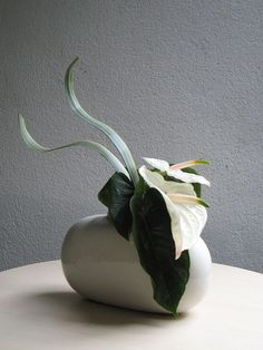Anthurium, Phormium Find the best turntables for #Ikebana #artists at Turnadaisy.com