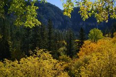 Spearfish Canyon Fall