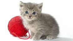 Gato: o animal ideal do século XXI - Ciência - Notícia - VEJA.com
