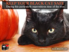 REMEMBER to KEEP YOUR BLACK CAT SAFE & INDOORS especially during this particularly superstitious time of the year.