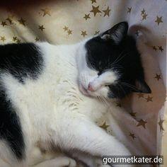 Katze Kitti ist schon ganz in Weihnachts-Stimmung! #cat #cats #xmas