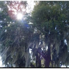 @penelope Mt.Dora, Florida