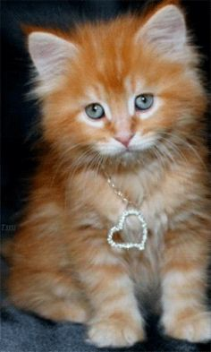 kitty with bling