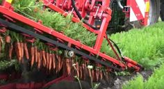 "The Dewulf GKIIISE falls into the category of ""really big, extremely specialized machines"" and can pluck three whole rows of carrots out of the ground without harming them."