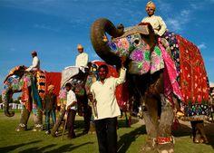 Festival des éléphants, Jaïpur, inde, india (Philippe Guy)  book your next tour: www.mountainadventuresindia.com