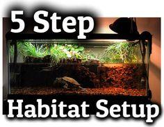 turtle habitat setup