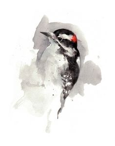 woodpecker watercolor painting - david scheirer