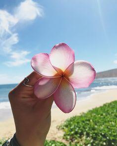 Aloha beautiful x @ashleyklampe