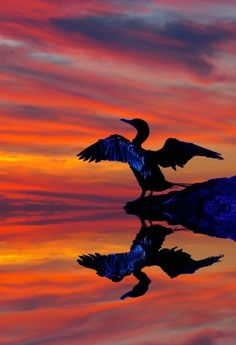 bird, sunset, reflection... wow