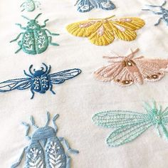 Embroideres beetles