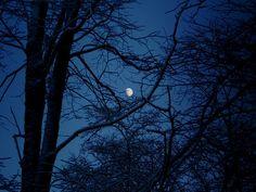 Ravenclaw INFJ Gemini Sun Pisces Moon Aquarius Rising Requested by: Vanitas, Ravenclaw, Harry Potter Casas, Dreamland, Blue Aesthetic Dark, Everything Is Blue, Hogwarts Houses, Medan, Midnight Blue