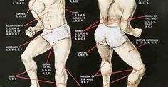 martial arts strike points chart poster - Bing images