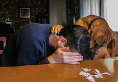 Pets Who Know Exactly How To Comfort Their Owners