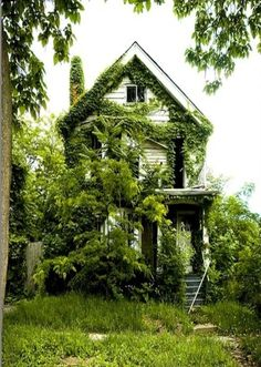 if I could get my hands at that house and restore it, the simple architecture and lush beautiful location would create a perfect site for my homestead.