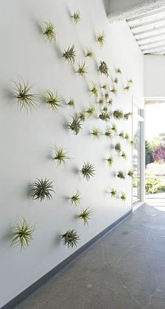 The Silicon Valley HQ of data storage company Evernote features a coffee bar in the lobby, staircases with built-in seating and an in-house artist to paint murals on whiteboards. And also this amazing tillandsia/air plant wall! Evernote, Flora Grubb, Green Office, City Office, Office Plants, Deco Floral, Interior Plants, Interior Design, Interior Ideas