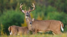 West Virginia hunter killed in accident on opening day of deer season Hunting Pictures, Deer Hunting, West Virginia, Kangaroo, Goats, Seasons, Animals, Binoculars, Track