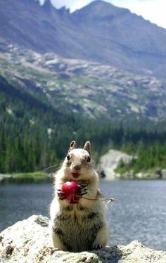 Lipstick Squirrel.. (by Caryn Walters)