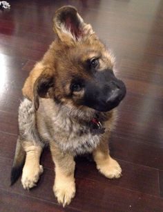 german shepherd puppies #germanshepherd