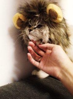 Pet Costume Lion Mane Wig for Dog Cat