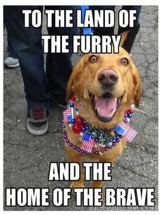 Here are some of my favorite funny of July memes. Have a great fourth of July with a funny fourth of July meme or two! 4th Of July Meme, 4th Of July Images, Independence Day Quotes, July Quotes, Very Funny Memes, Alice And Wonderland Quotes, Happy Fourth Of July, Animal Memes, Funny Animals