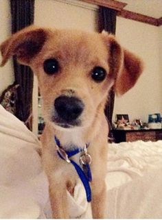 """Your Afternoon """"Aww"""": See A Photo Of Ariana Grande's Golden Retriever   OK! Magazine"""