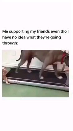 Funny Animal Jokes, Stupid Funny Memes, Funny Laugh, Funny Facts, Funny Pranks, Hilarious, Crazy Funny Videos, Funny Videos For Kids, Cute Funny Dogs