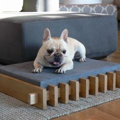 Very cool pet bed. Unique Dog Beds, Cool Dog Beds, Cool Pets, Cool Dog Houses, Pet Furniture, Dog Show, Pet Beds, Diy Stuffed Animals, Dog Design