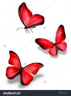 Three Red Butterfly, Isolated On White Background Стоковые фотографии 175106534 : Shutterstock