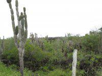 Galápagos Plants, Planters, Plant, Planting