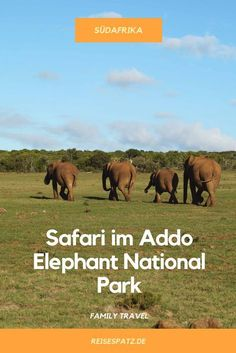 Hier erhältst du neben praktischen Tipps für deinen Aufenthalt im Addo Park eine Übernachtungsempfehlung sowie alles, was du über eine Safari im eigenen Auto wissen musst. Garden Route, Addo Elephant National Park, Südafrika