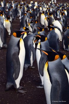 10 Reasons You Should Visit the Falkland Islands // Brittany from Boston