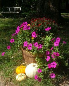 https://shalomschultzdesigns.wordpress.com/2015/09/30/petunias-and-pumpkins/